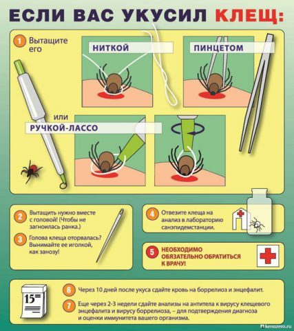 First aid for tick bites