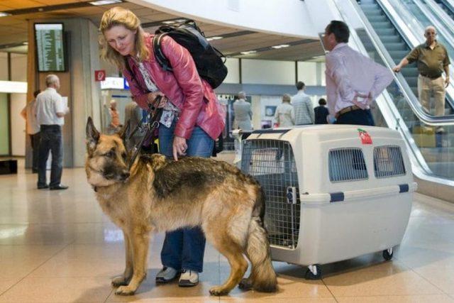 С собакой на самолет