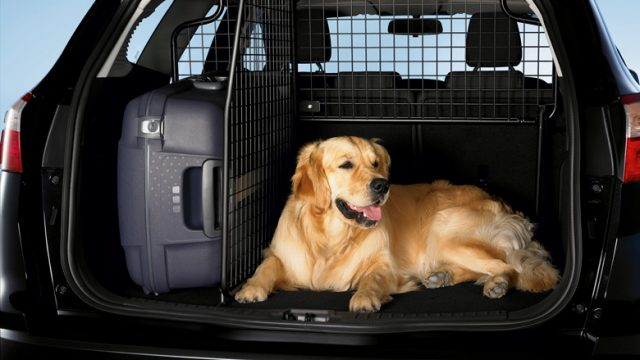 Безопасная перевозка собаки
