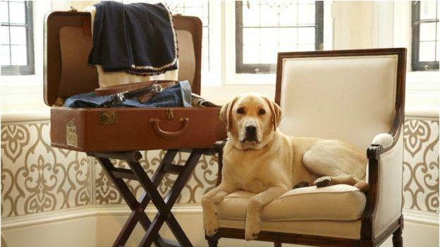 В отель с собакой