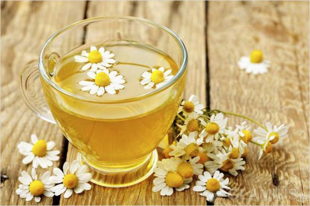 decoction of chamomile
