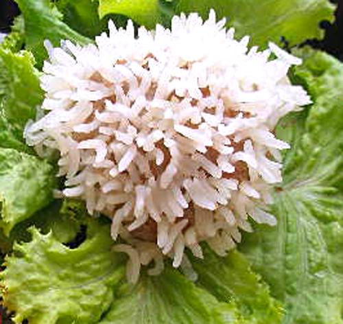 Что такое марципан и из чего их готовят